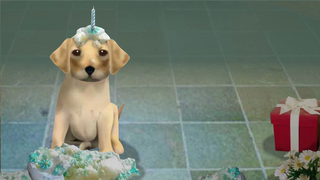 transcript: Even the dog is happy your birthday is finally here!