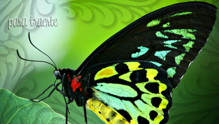 transcript: Que las alas de una mariposa  besen el sol y encuentren tu hombro para alumbrarlo para traerte suerte felicidad y riqueza hoy, mañana y siempre  Deseándote un muy  Feliz Cumpleaños